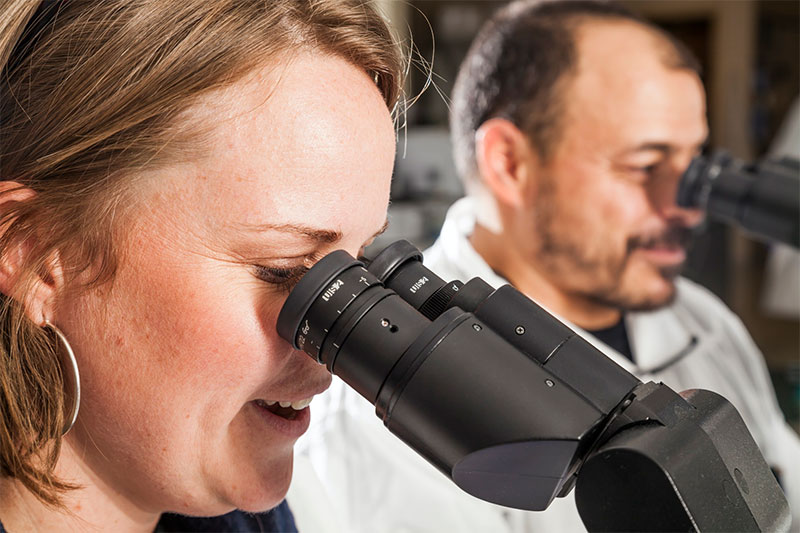 Pair of lab staff using microscopes