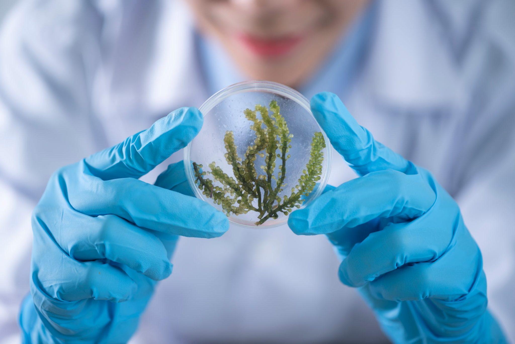 bioscience in a petri dish